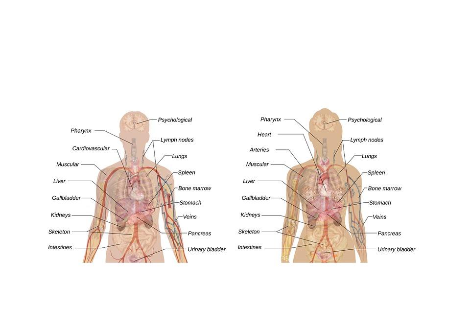【医師が解説】胃痛の原因と対策